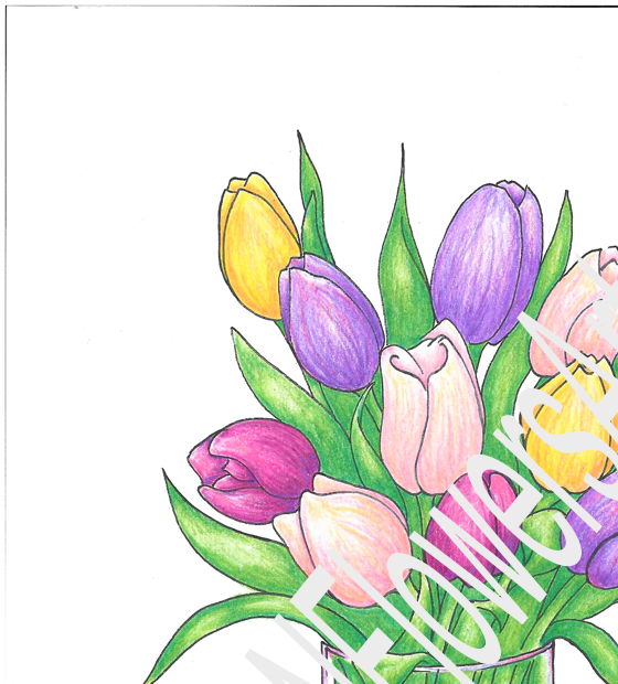 Colored Tulip With Watermark - Crop 1